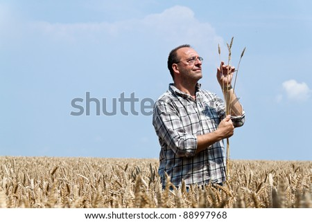 a farmer - farmer in the corn field. checks the harvest