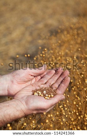A farmer  holding a sample of this years flax harvest, focus on seeds.
