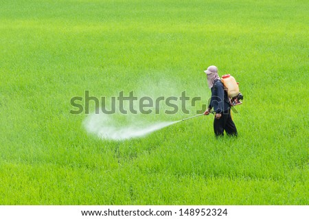 A farmer spraying fertilizer or insecticide in paddy field - stock photo