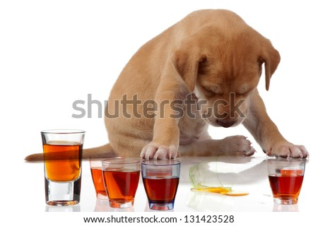 A fatigued puppy sits with its head down over some tots of alcohol. - stock photo
