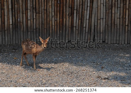 A fawn in a park. - stock photo