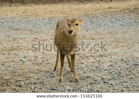 A Fawn in the barren ground