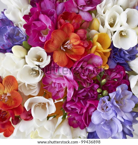 a feast of freesia flowers, natural background - stock photo