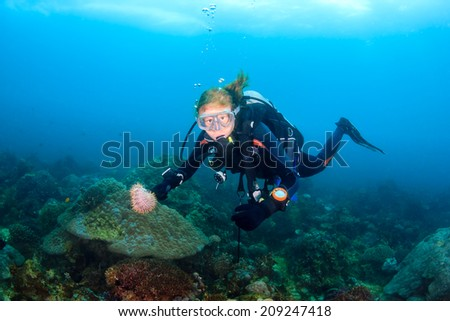 A Female SCUBA diver collecting invasive Crown of Thorns starfish.  Crown of Thorns cause huge damage to coral reefs during outbreaks. - stock photo
