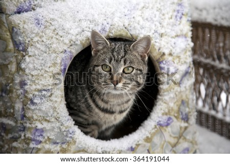 A feral cat finds shelter from the snow. - stock photo