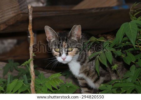 A Feral Cat Hiding Behind Green Bushes - stock photo