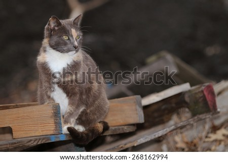 A Feral Cat Searching Through a Wood Pile for Prey