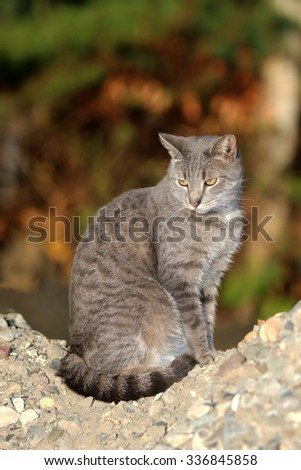 A Feral Cat Sitting on a Pile of Rocks While Searching for Prey - stock photo