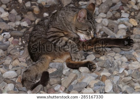 A Feral Cat Stretching as Much as it Can While Trying to Clean its Fur - stock photo