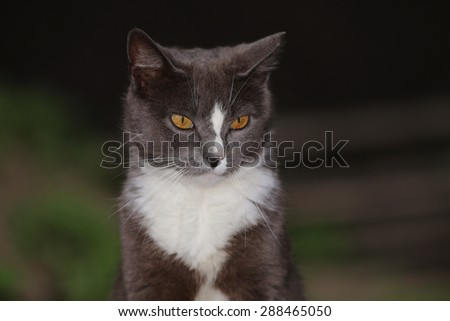 A Feral Cat with Intense Yellow Eyes - stock photo