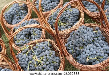 A few baskets with mature grapes - stock photo