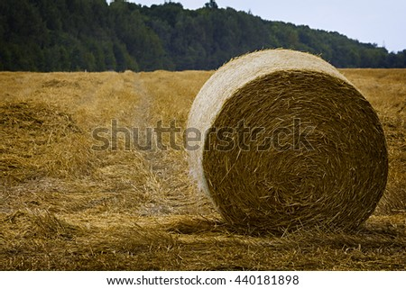 A field a freshly cut hay with round bales set against a blue sky - stock photo