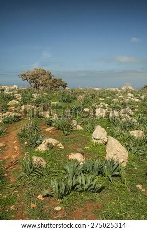 A field at Akamas peninsula�of Cyprus - stock photo