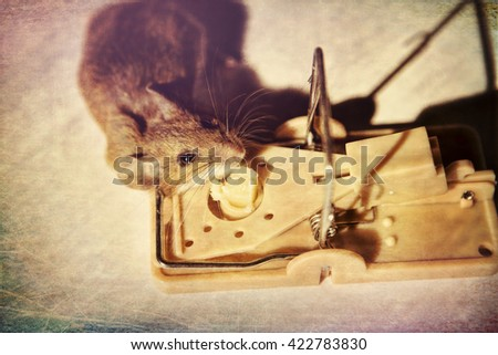 A field mouse lies dead in a mousetrap, seemingly never having tasted the swiss cheese that lured him to his death.