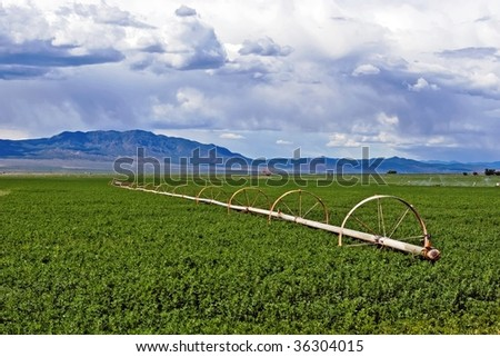 A field of alfalfa with a wheel line sprinkler. - stock photo