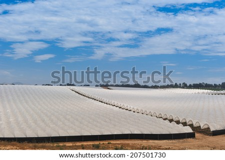 A field of crops covered by white plastic material - stock photo