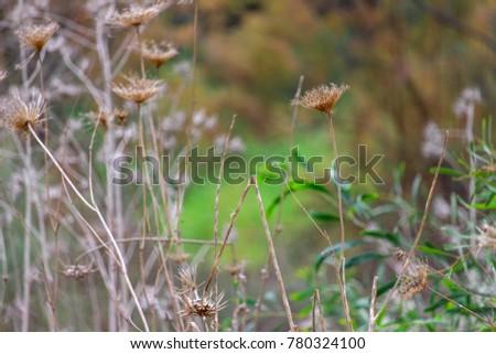 A Field Of Dead Flowers