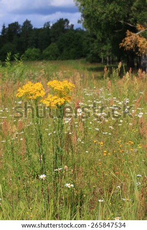 A field of grass, the edge of the forest, Russia - stock photo
