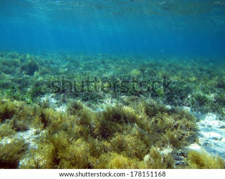 A field of green algae in the shallows - stock photo