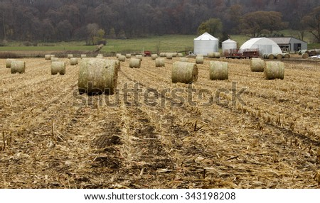 A field of large round corn bales in a rural setting. - stock photo
