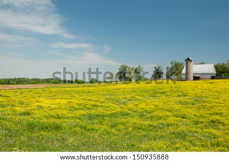 A field of wildflowers blooming in a farm meadow. - stock photo