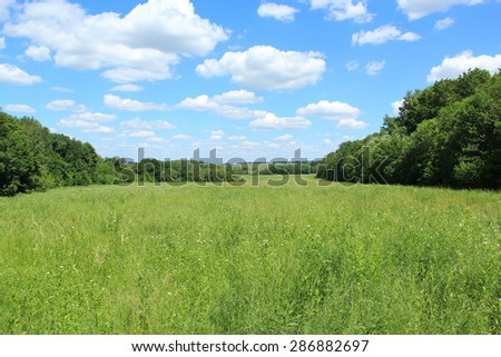 a field overgrown with grass, trees and sky