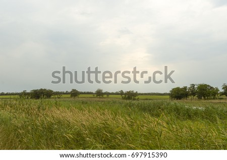 A field overgrown with steppe grass and reeds. Somewhere trees.