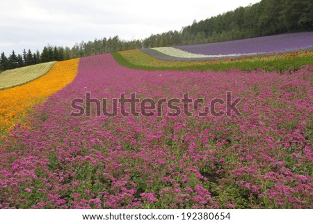 A field, surrounded by trees, with stripes of different colored flowers growing. - stock photo