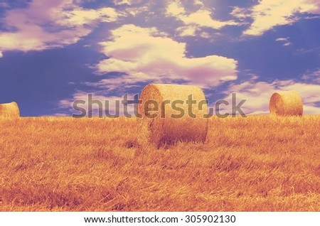 A field with straw bales after harvest. retro