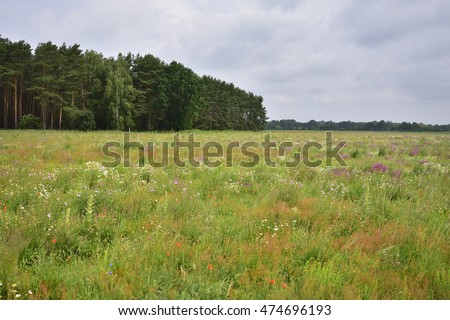 A field with useful plants.