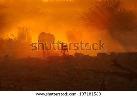 A fiery sunset at Okaukeujo waterhole, Namibia - stock photo