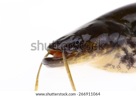 A fish head features, on a white background   - stock photo