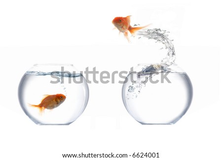 A fish leaping out of the water