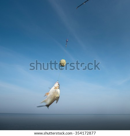 A fish rises to the bait with blue sky background