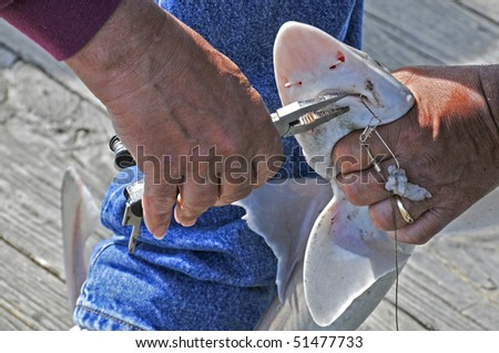 A fisherman removing the hook from a sharks mouth - stock photo
