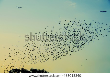 A flock of birds in the sky at sunset
