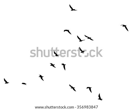 a flock of birds on a white background