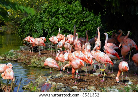 A flock of flamingos on a bright sunny day
