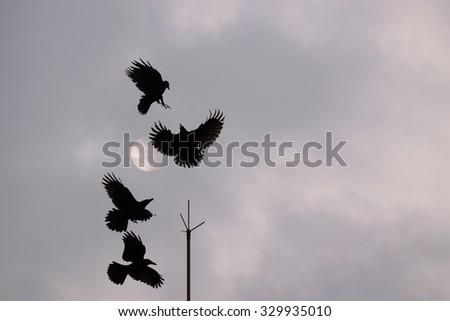A flock of four black crows squabbling over lightning rod perch against a cloudy grey sky background - stock photo