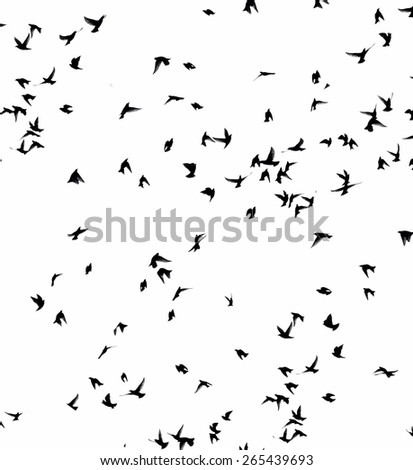 A flock of migratory birds. set of black silhouettes of birds flying in the sky. Isolated on white background, motion blur