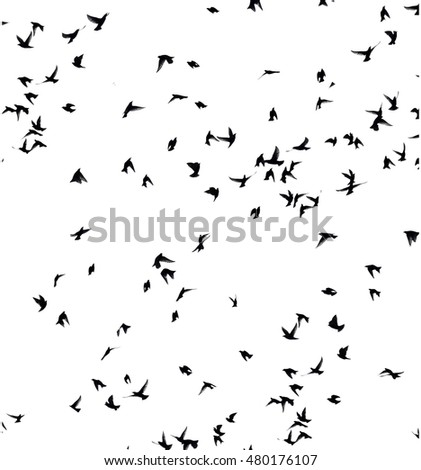 A flock of migratory birds. set of black silhouettes of birds flying in the sky. Isolated on white background