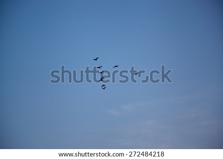 A flock of Nepal  flock of birds - stock photo
