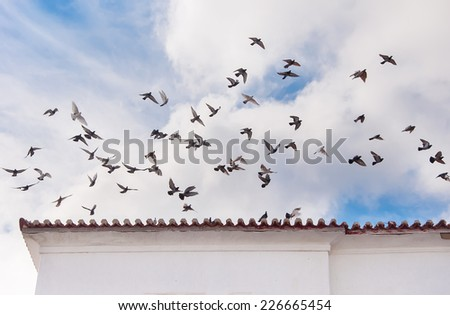 A flock of pigeons flies over the roof of the house against the blue sky with clouds. - stock photo