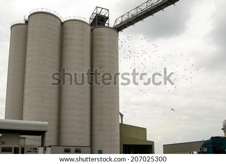 A flock of pigeons flying around the tall, concrete silos at Southampton Grain Terminal at the docks in the Hampshire city. - stock photo