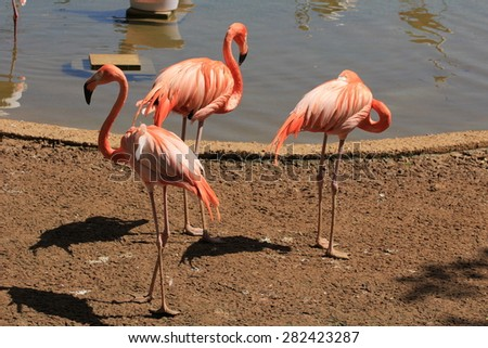 a flock of pink flamingos on the bank