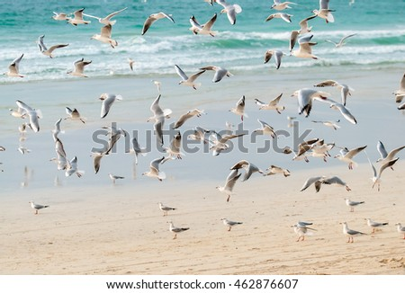 A flock of seagulls on the beach.
