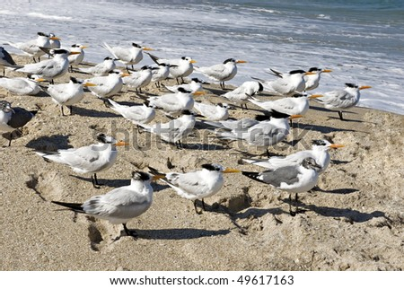A flock of seagulls standing at the shoreline on a bright sunny day, shadows from sun, horizontal with copy space