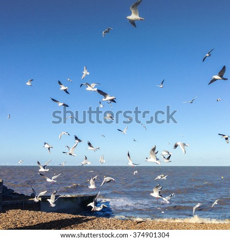 A flock of seagulls take of over a pebble beach against a bright blue sky in Herne Bay, Kent, UK. Wind turbines can be seen on the horizon. Mobilestock