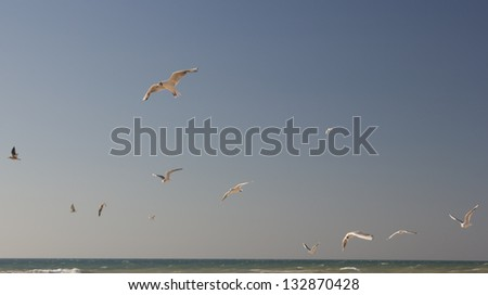 a flock of seagulss above the sea skyline - stock photo