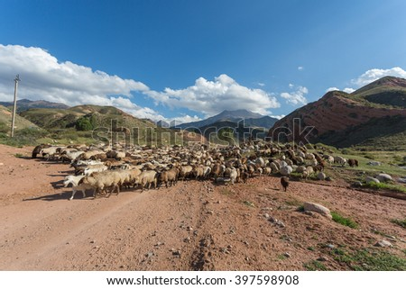 a flock of sheep in the mountains of Kyrgyzstan - stock photo